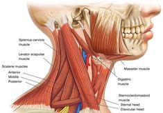 neck strength neck training jiu jitsu