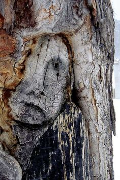 This fine melan­cholic tree face was photographed in or near Ottawa in Canada