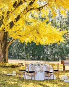 Ginko Tree, Southern Ladies, Thanksgiving Table Settings, Fall Drinks, Autumn Scenery, French Countryside, Outdoor Furniture Sets, Outdoor Decor, Outdoor Entertaining