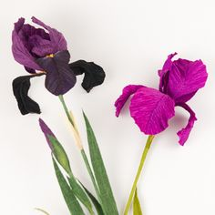 Crepe Paper Iris - Castle in the Air Online Shoppe