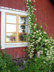 Elins Stuga: Junistorm och verandamålning