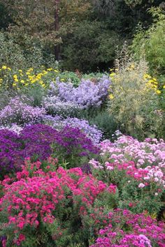 A family run business, since 1906, specialising in breeding and growing MICHAELMAS DAISIES (Autumn Flowering Asters).