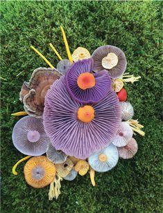 Notions of Companionship — Stay Wild Magazine Wild Mushrooms, Stuffed Mushrooms, The Mysterious Island, Sea Snail, Mushroom Art, Dream Photography, Stay Wild, Organic Form, Small Paintings