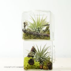Miniature Geometric Air Plant Terrarium// Glass by PinkSerissa