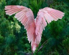 Flamingo's wing | Photography by ©Abbas Khasaroh