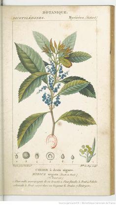 Dictionnaire des sciences naturelles.... Partie 2 / Par plusieurs professeurs du Jardin du roi   1816-1845
