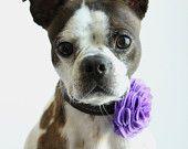 Red Felt Flower Dog Collar Accessory. $10.95, via Etsy.