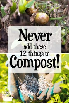 Making compost is easy, and a great way to convert kitchen and garden waste into nourishing soil. However, there are some things you can't compost--learn what they are and why you shouldn't compost them. #gardening #organicgardening #permaculture #forbeginners #ecofriendly #nontoxic How To Make Compost, Making Compost, Organic Vegetables, Growing Vegetables, Gardening For Beginners, Gardening Tips, Composting At Home, Composting Methods, Sustainable Farming