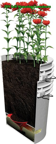 DIY Self-Watering Containers  You can grow just about anything you'd grow in the ground in self-watering containers.Self-watering containers have a water re