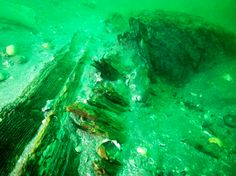 Japanese archaeologists think they've found the remains of a ship that was part of Kublai Khan's ill-fated invasion fleet 700 years ago.  http://www.archaeology.org/news/2568-141003-japan-mongol-shipwreck  (Image University of the Ryukyus/Matsuura City)