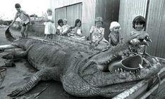 Sweetheart, était un saltwater géant de 5,5m de long  qui vivait dans la Mary River dans les années 70. Il a été tué lors de sa capture et est aujourd'hui exposé au musée du Territoire du Nord à Darwin.