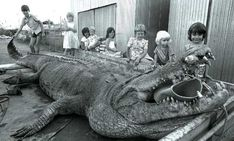 Largest Crocodile Ever | Fri, Apr 29, 2011 12:58 PM