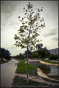 [2013 - Valencia - Espanha / España / Spain] #fotografia #fotografias #photography #foto #fotos #photo #photos #local #locais #locals #cidade #cidades #ciudad #ciudades #city #cities #europa #europe #turismo #tourism #arvore #arbol #tree