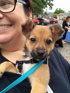 Mojo is an adoptable Chihuahua searching for a forever family near Mount Laurel, NJ. Use Petfinder to find adoptable pets in your area.