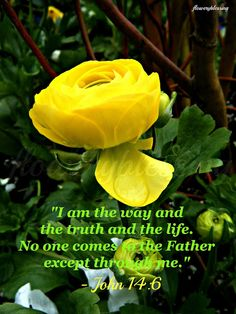 John 14:6...Flowery Blessing: May 2013