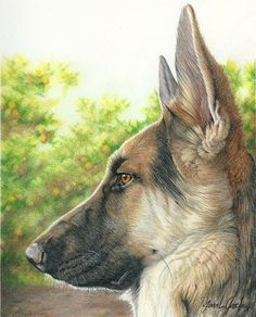 I searched for Dog Portrait  color pencil images on Bing and found this from http://www.germanshepherds.com/forum/chat-room/384074-nice-gsd-sketch-art.html