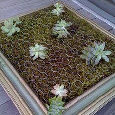 Sukkulenten Bilderrahmen Pflanzenbild Diy Gruene Wand Luna See