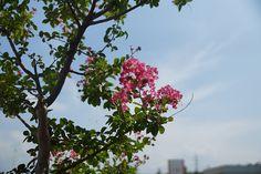 お庭の花たち(14/08/07)