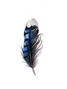 feather feathers blue black