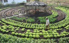 O país nórdico está trabalhando forte para substituir os alimentos cultivados…