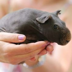 Baby hippo. <3 to match my earrings!