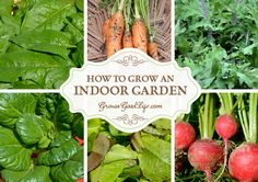 You can grow edibles in your own indoor garden. Craving fresh harvests during the winter or lack outdoor gardening space? Then start an indoor garden.