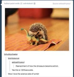 How dinosaurs became extinct. | Community Post: 12 Times The Science Side Of Tumblr Explained It Better