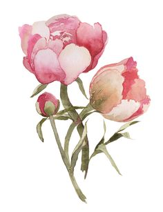 Happy New Year! Finally a little painting time :)Peony print available here Watercolor Projects, Watercolor Cards, Watercolor Flowers, Watercolor Paintings, Botanical Flowers, Flowers Nature, Botanical Prints, Art Floral, Transparent Flowers