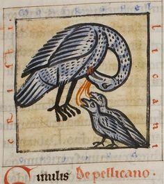 Medieval Bestiary : Pelican Gallery