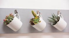 display succulents in tea cups