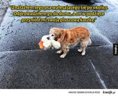 Funny Animals, Cute Animals, Komodo Dragon, Call Art, Dog Quotes, Beautiful World, Dogs And Puppies, Funny Pictures, Kawaii