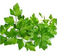Parsley, Herbs, Health, Food, World, Flower Pots, How To Make, Plants, Garten
