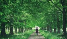 The health-boosting Japanese practice of forest bathing is making waves in the wellness world. Walking Meditation, Zen Meditation, Meditation Quotes, Different Types Of Meditation, Vipassana Meditation, Feeling Of Loneliness, Forest Bathing, Making Waves, Britain