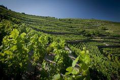 Vineyards Porto