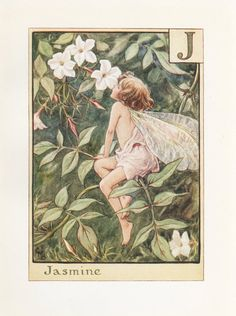The image of the Jasmine Flower Fairy above is one of Cicely Mary Barker's Flower Fairies. First published in A Flower Fairy Alphabet, London, Blackie, Cicely Mary Barker, Fairy Land, Fairy Tales, Fairy Pictures, Vintage Fairies, Alphabet Print, Beautiful Fairies, Flower Fairies, Magical Creatures
