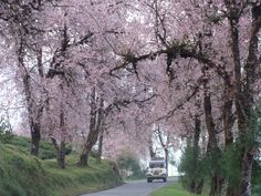Sikkim in Spring...Gorgeous:) #indiatravel #travelphotography India Information, Union Territory, Gangtok, Northeast India, States Of India, Bhutan, Lonely Planet, India Travel, Himalayan