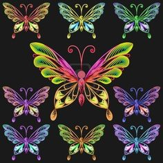 Fine collection of multicolored butterflies on a black background Stock Photo