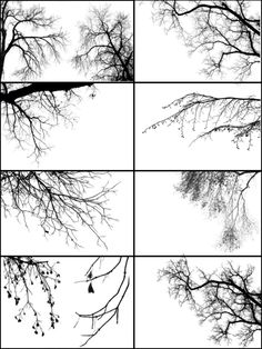 Tree Borders III by midnightstouch.deviantart.com on @deviantART