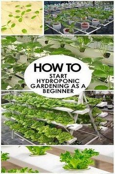 Hydroponics Hydroponic Gardening for New - Hydroponic Gardening for New Beginners. The hydroponic system structure must be able to support the root system without soil Aquaponics System, Hydroponic Farming, Hydroponic Growing, Growing Plants, Aquaponics Garden, Indoor Hydroponic Gardening, Vertical Hydroponics, Planting Plants, Vertical Farming