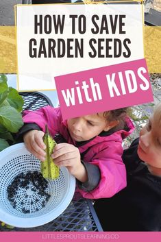 We teach kids about germinating seeds and growing seeds and that's wonderful, but taking the time to save seeds with kids teaches them where seeds come from and it's a great STEM project. Science Activities, Activities For Kids, Family Child Care, Container Gardening, Vegetable Gardening, Buy Seeds, Homestead Gardens, Stem Projects, Growing Seeds
