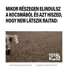 #viccek #vicceskép #viccesképek #viccesgif #viccesvideok #humoroskepek #poén #poénos #mém #mémek #magyarmeme #magyarmemek #hülyeség #hülyeségek #nevetés #nevess #részeg #kocsma Lol, Humor, Funny, Humour, Moon Moon, Ha Ha, Jokes, Funny Jokes, Hilarious