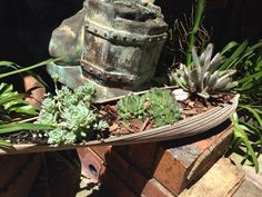 Succulents growing in a palm tree bark... I have plenty of these falling off in my garden!!!!