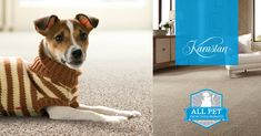 Karastan SmartStrand Forever Clean carpet with All Pet Protection and Warranty, covers all pets, all accidents, all the time!