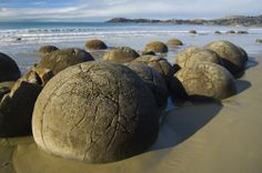 The Moeraki Boulders, founded in New Zealand are unique large and spherical shaped, grey colored boulders located along the stretch of koekohe beach.   The composition is very unique and interesting comprising of clay, fine silt, and mud, bounded by the calcite.
