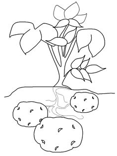 potato coloring pages printables
