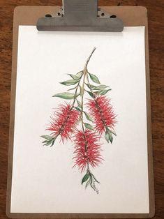 Original artwork by Australian Wildflowers, Australian Native Flowers, Australian Artists, Watercolor Drawing, Watercolor Flowers, Watercolor Paintings, Watercolor Techniques, Botanical Art, Botanical Illustration