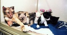 This mother cat is a great example. When the house caught fire, she did not simply wait...