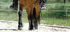 Seitengänge reiten gehört zum Pflichtprogramm eines jeden Reiters. Hier findest du Ideen, wie du Seitengänge in dein Training einbinden kannst.