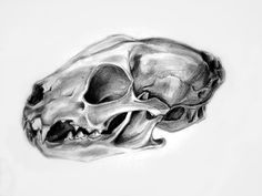 Wild_Cat_Skull_1_by_gabitzadesign