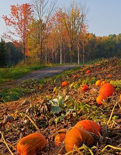 The pumpkins pop into view this time of year as the frost knocks down the engulfing foliage. The warm morning light amplified the orange glow in this patch in Bellows Falls, Vermont. Harvest Time, Fall Harvest, October Country, Autumn Day, Happy Autumn, Winter, Fall Pictures, Pumpkin Pictures, Autumn Aesthetic